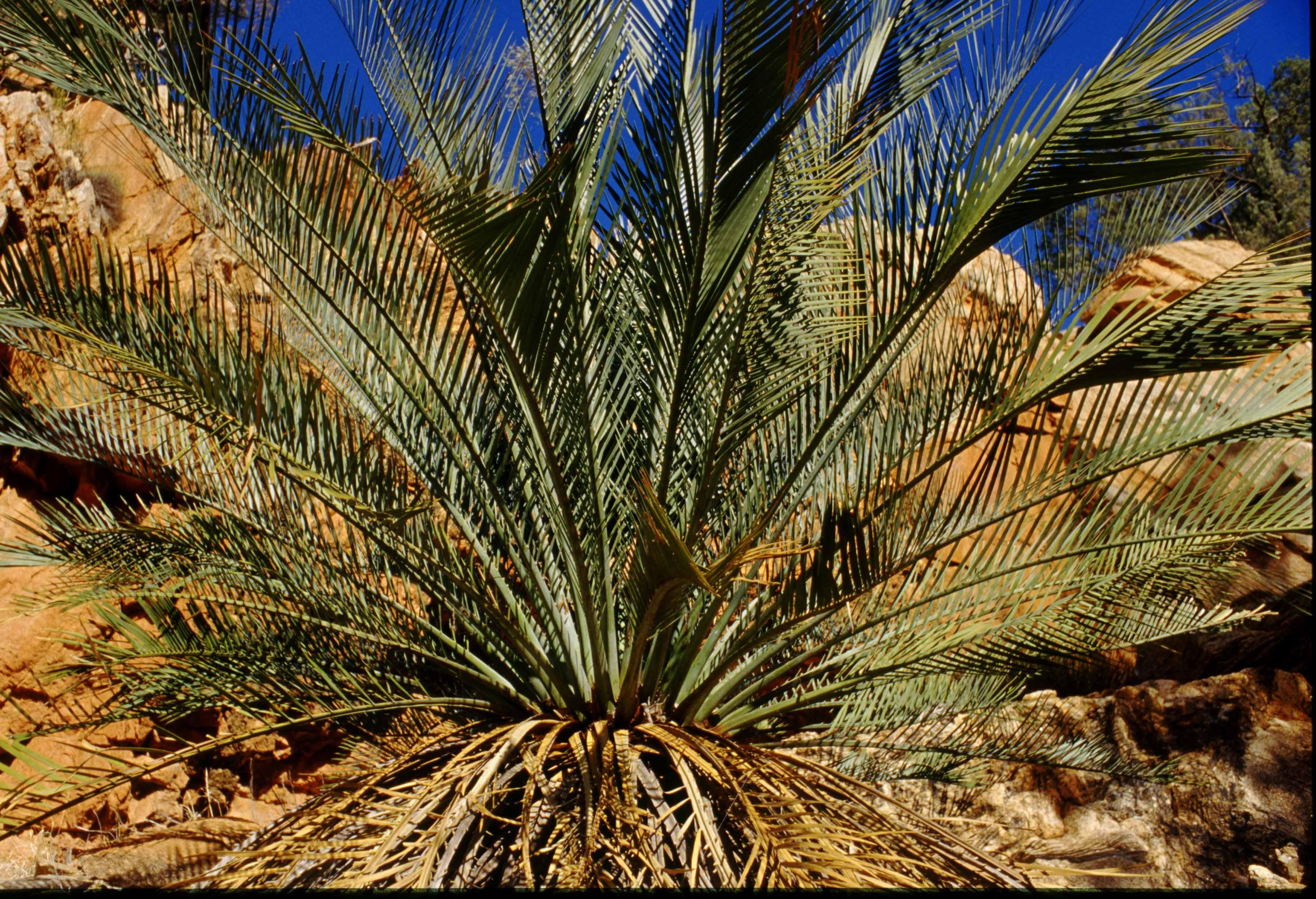 deserts animals and plants - photo #13